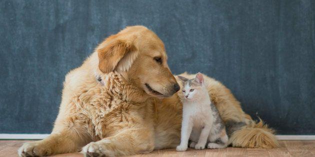 ペットの気持ちを知りたい人におすすめなのが電話占い