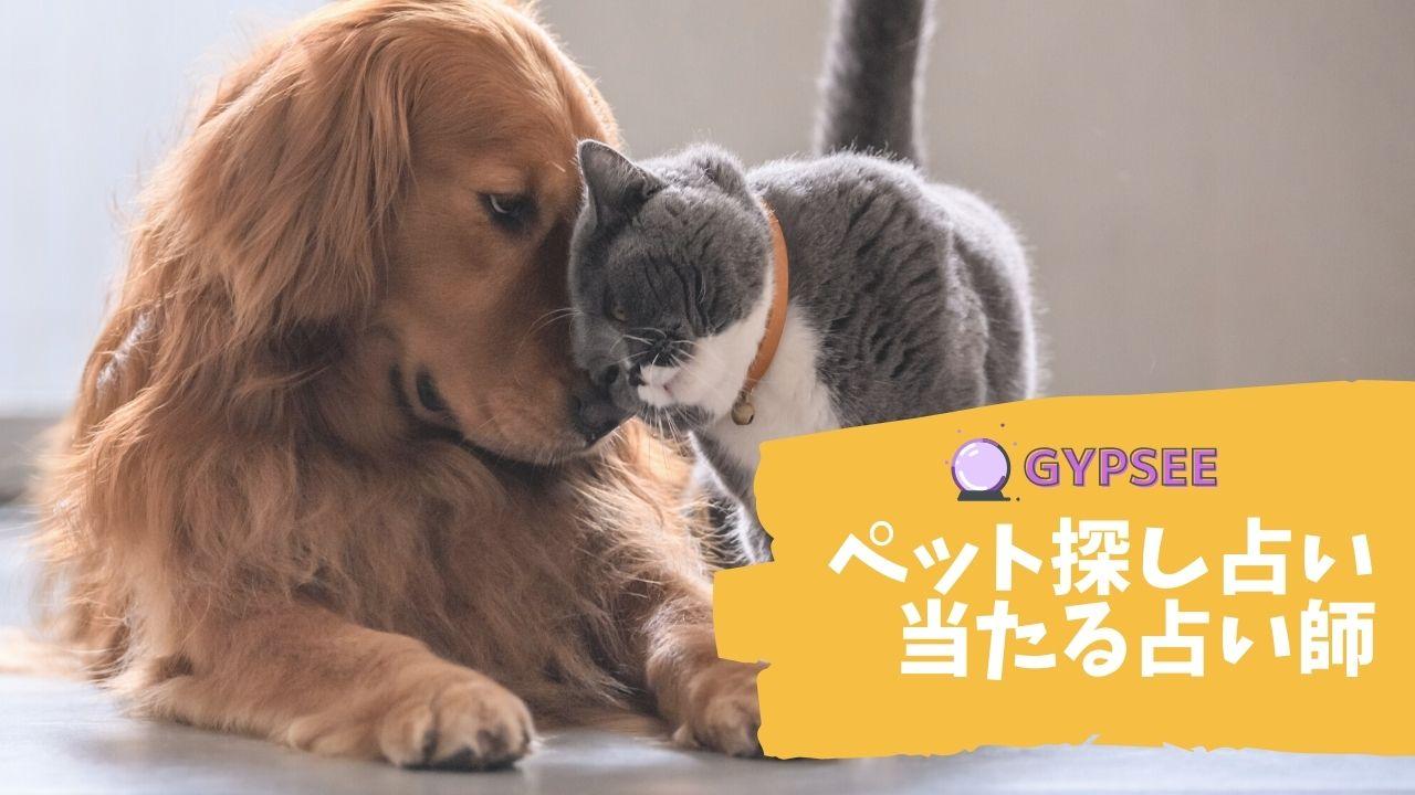 【ペット探し占い】迷子・行方不明の猫・犬やペットを霊視できる占い師