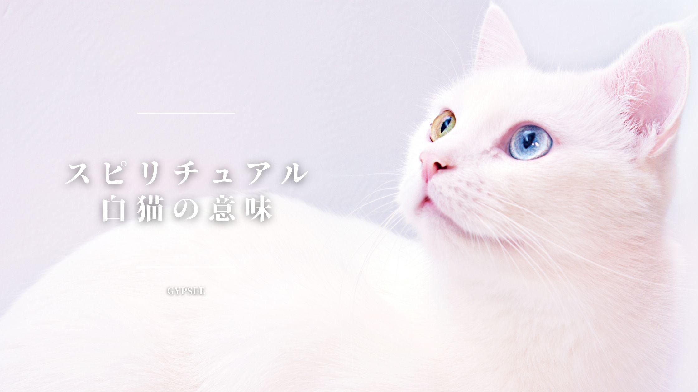 白い猫のスピリチュアル意味・ジンクスまとめ【完全版】
