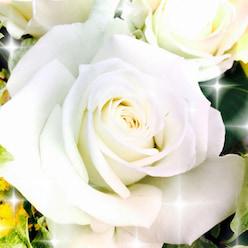ヒーリングサロン「ホワイトローズ」
