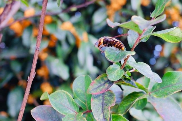 スズメバチに刺される夢