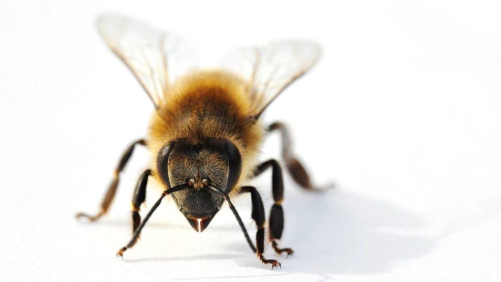 夢占い蜂に追われる