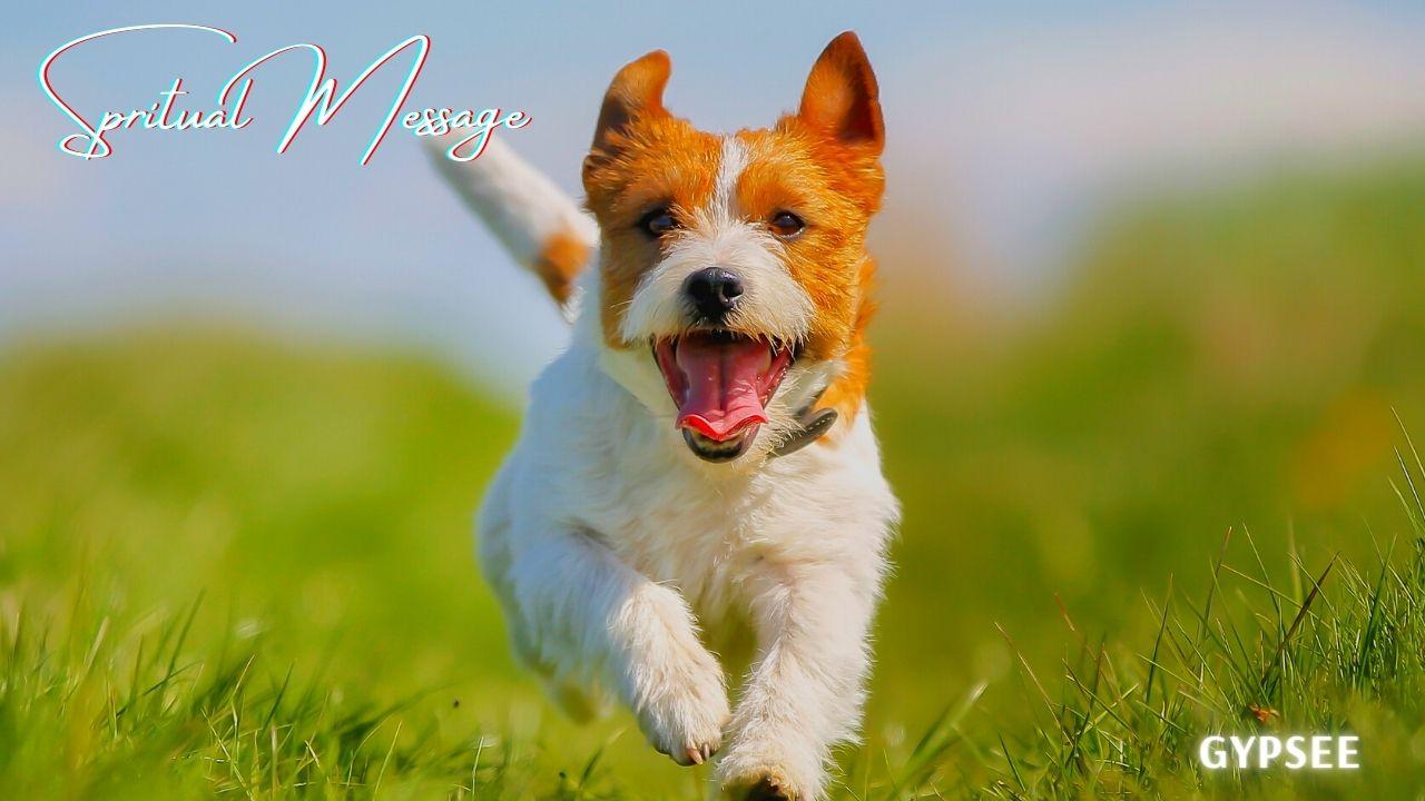 犬とスピリチュアル意味!飼う・出会い・白い犬・嫌われる人・好かれる人など