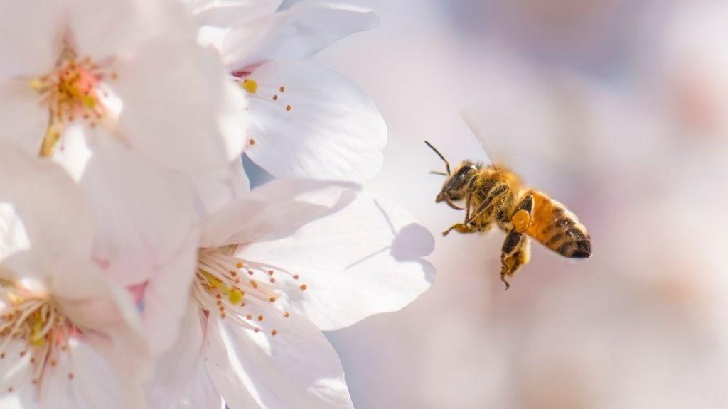 蜂に刺される夢の基本的な意味と心理