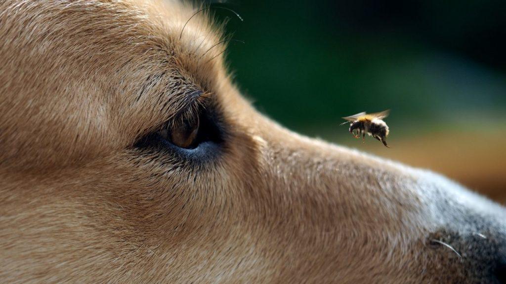 蜂に頭を刺される夢