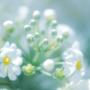 木村霊能研究所®の福始瑞雀先生のイメージ画像