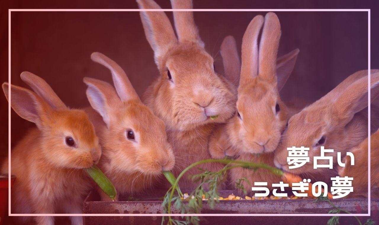 【夢占い】うさぎの夢の基本的な意味15選!飼う・噛まれる・子うさぎetc