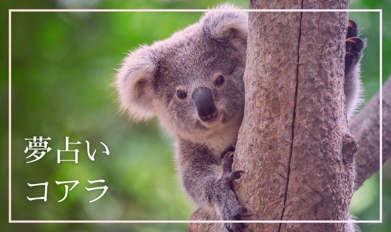 【夢占い】コアラの夢の心理・飼う・助ける・食べる・抱っこする・喋るなど