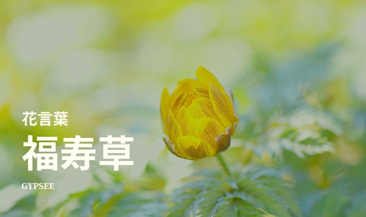 福寿草の花言葉・特徴・季節・育て方のポイント