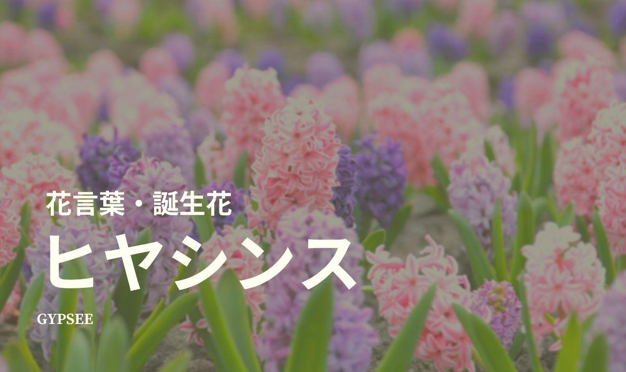 ヒヤシンスの花言葉・誕生花・スピリチュアル意味