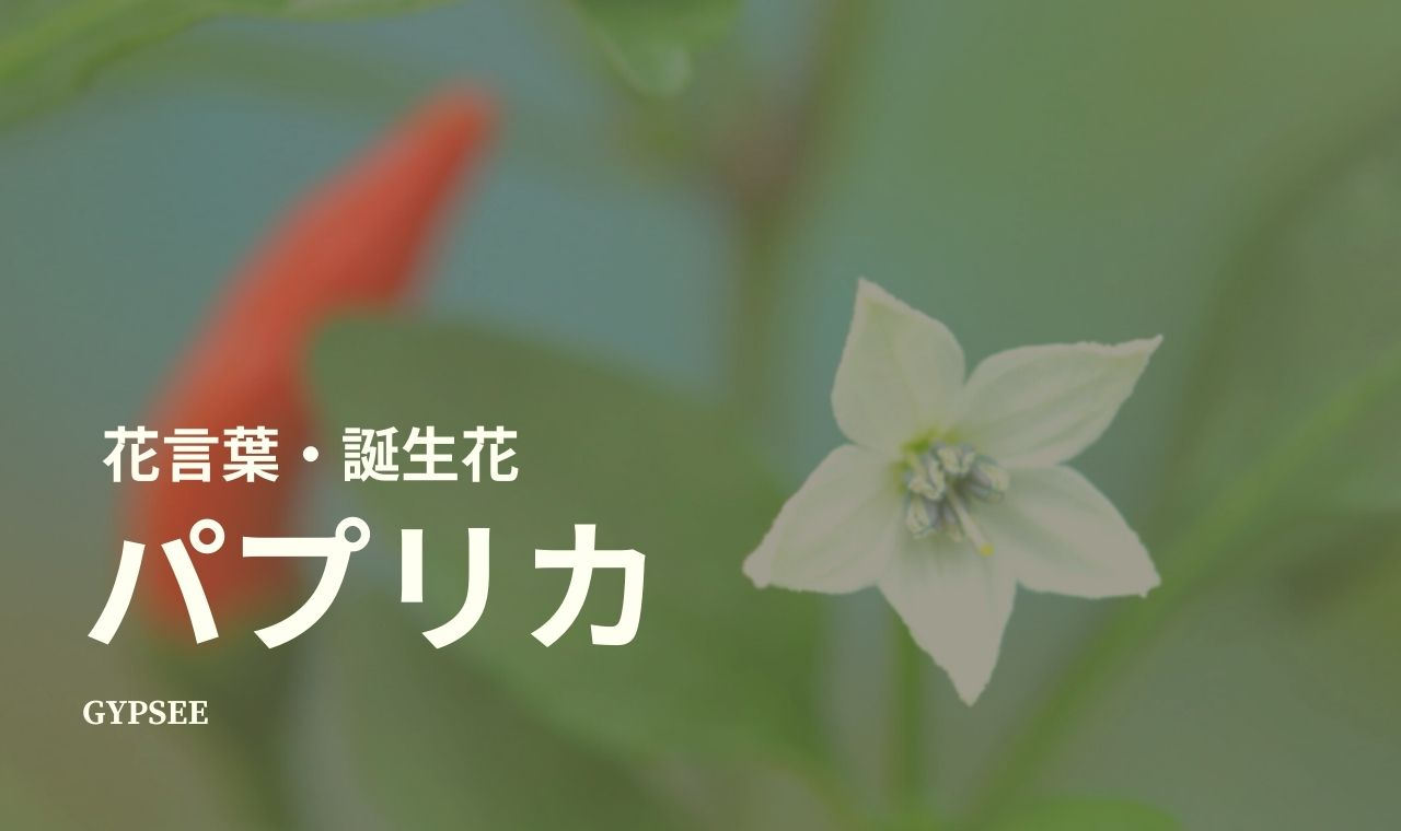 パプリカの花言葉・誕生花・種類・仲間・育て方