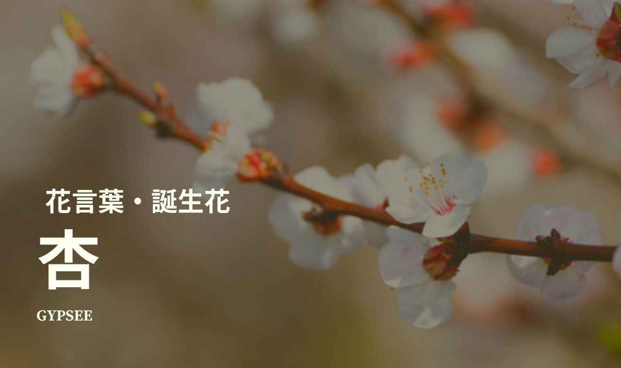 杏の花言葉・誕生花・種類・仲間・育て方