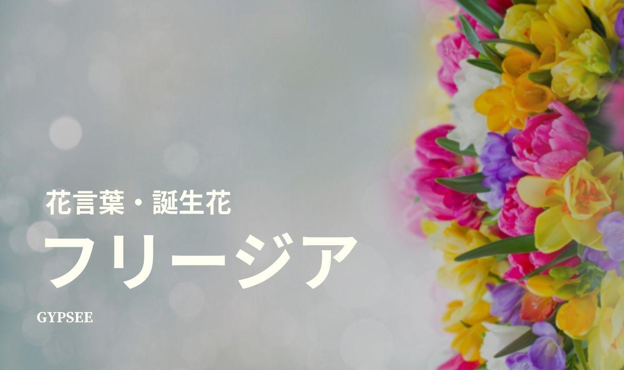 フリージアの花言葉・誕生花・育て方のポイント