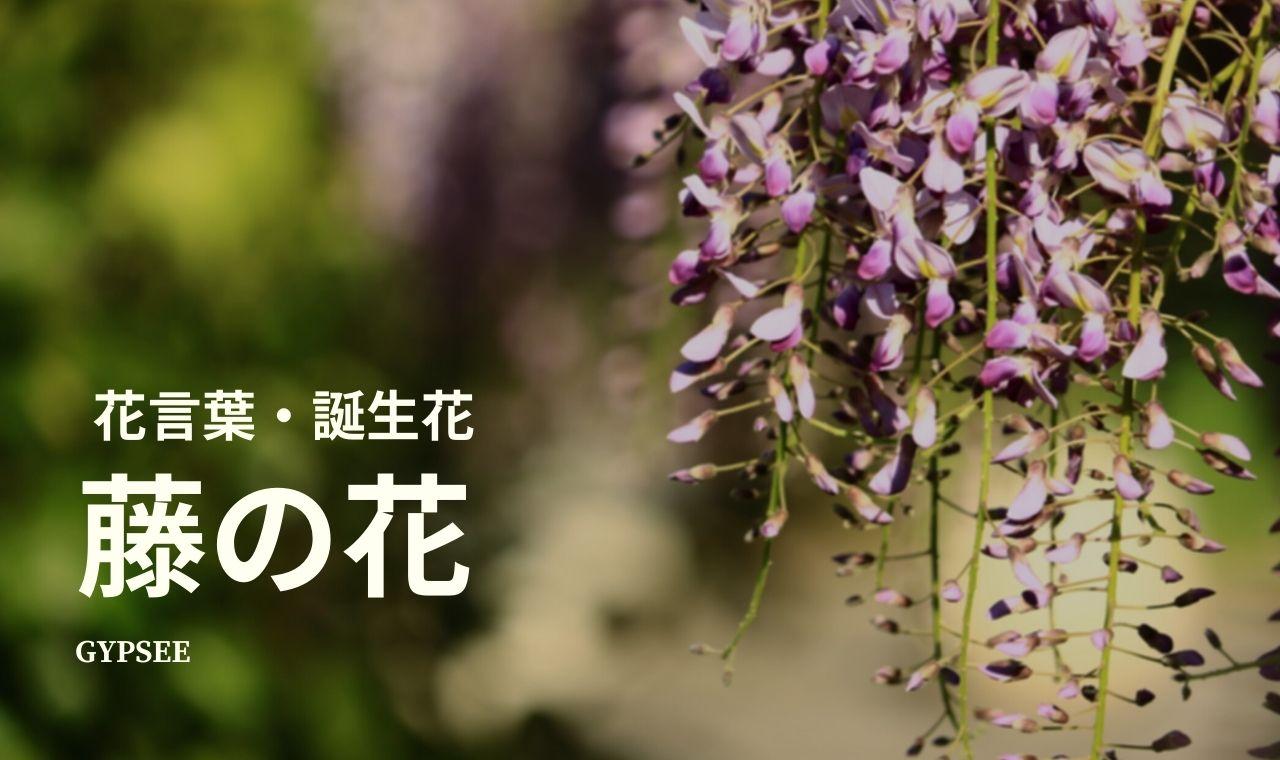 【本当は怖い】藤の花の花言葉・誕生花・スピリチュアル意味や効果・種類・仲間・育て方