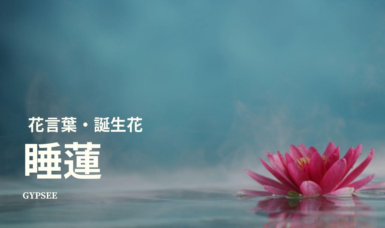 【滅亡・死?怖い】睡蓮の花言葉・誕生花・スピリチュアル意味や効果・種類・仲間・育て方