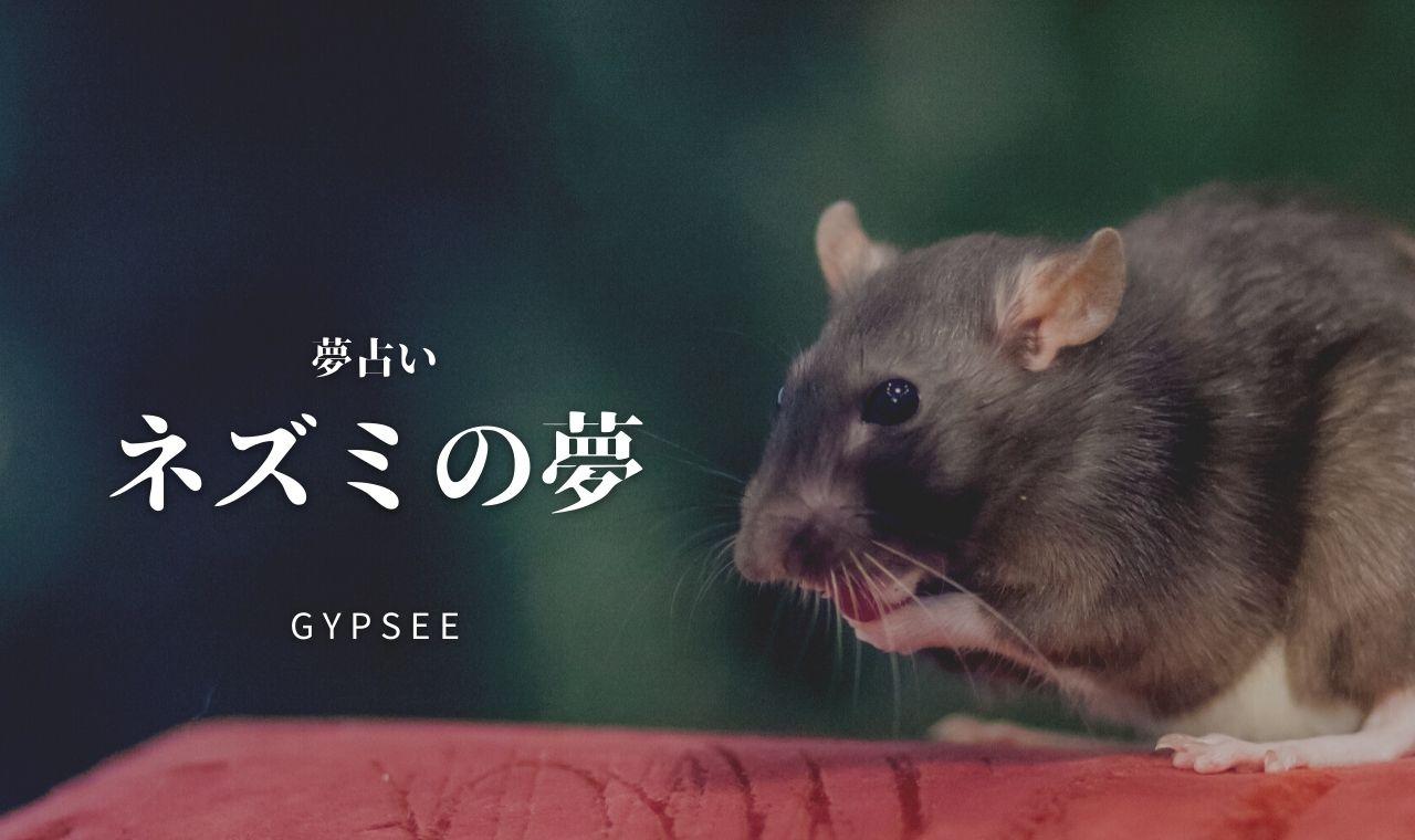 【夢占い】ネズミの夢40選