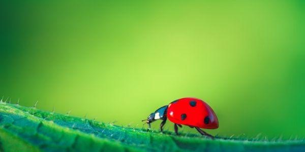 亡くなった人は虫になって会いに来る「虫の知らせ」