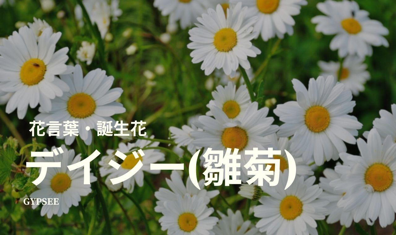 デイジー(雛菊)の花言葉・誕生花・育て方・種類