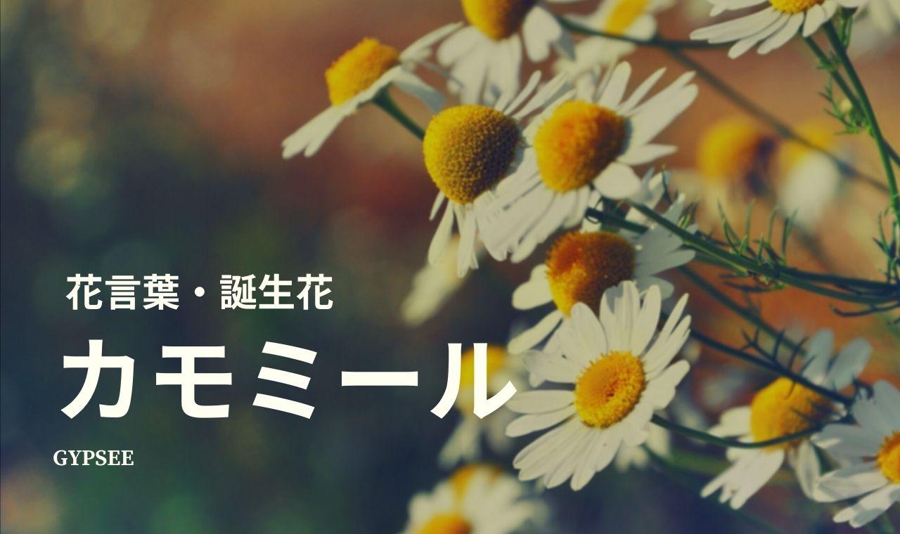カモミールの花言葉・誕生花・育て方・種類