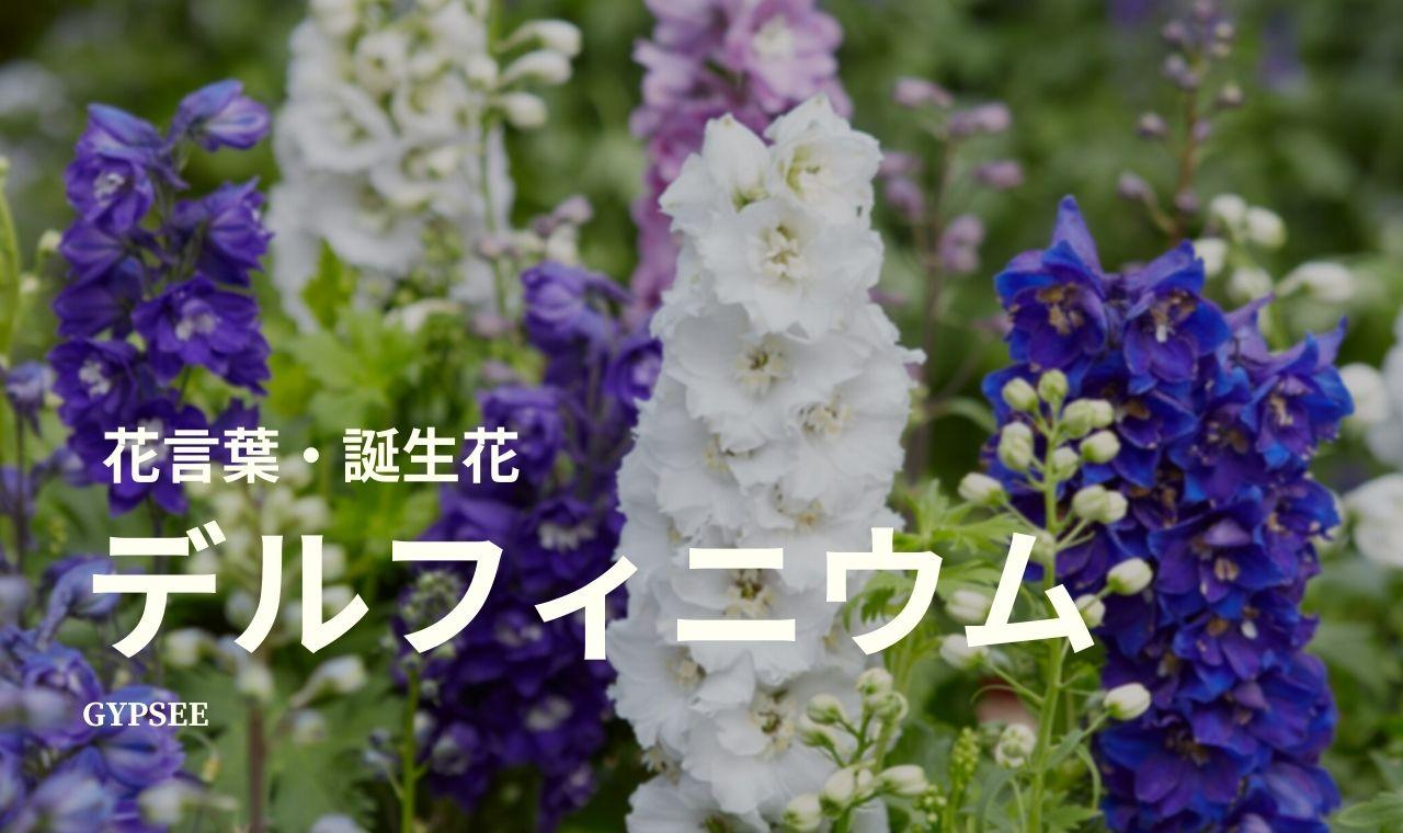 デルフィニウムとは?花言葉・誕生花・育て方・種類