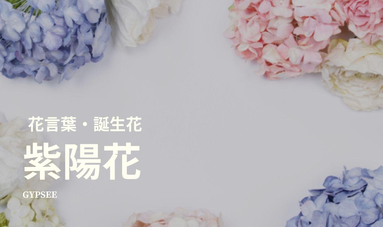 【怖い】紫陽花とは?花言葉・誕生花・育て方・種類