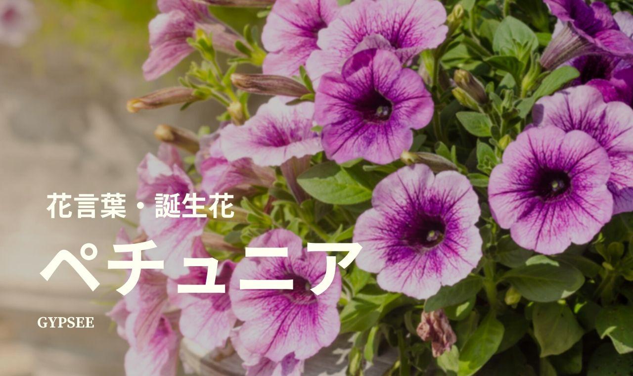 【怖い】ペチュニアとは?花言葉・誕生花・育て方・種類