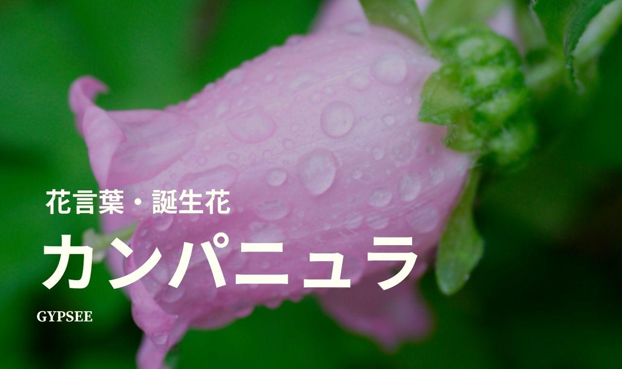 カンパニュラとは?花言葉・誕生花・育て方・種類など