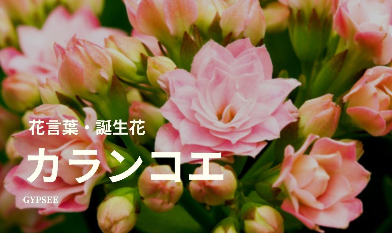 カランコエの花言葉は怖い?頭の良くなる花は本当?誕生花も