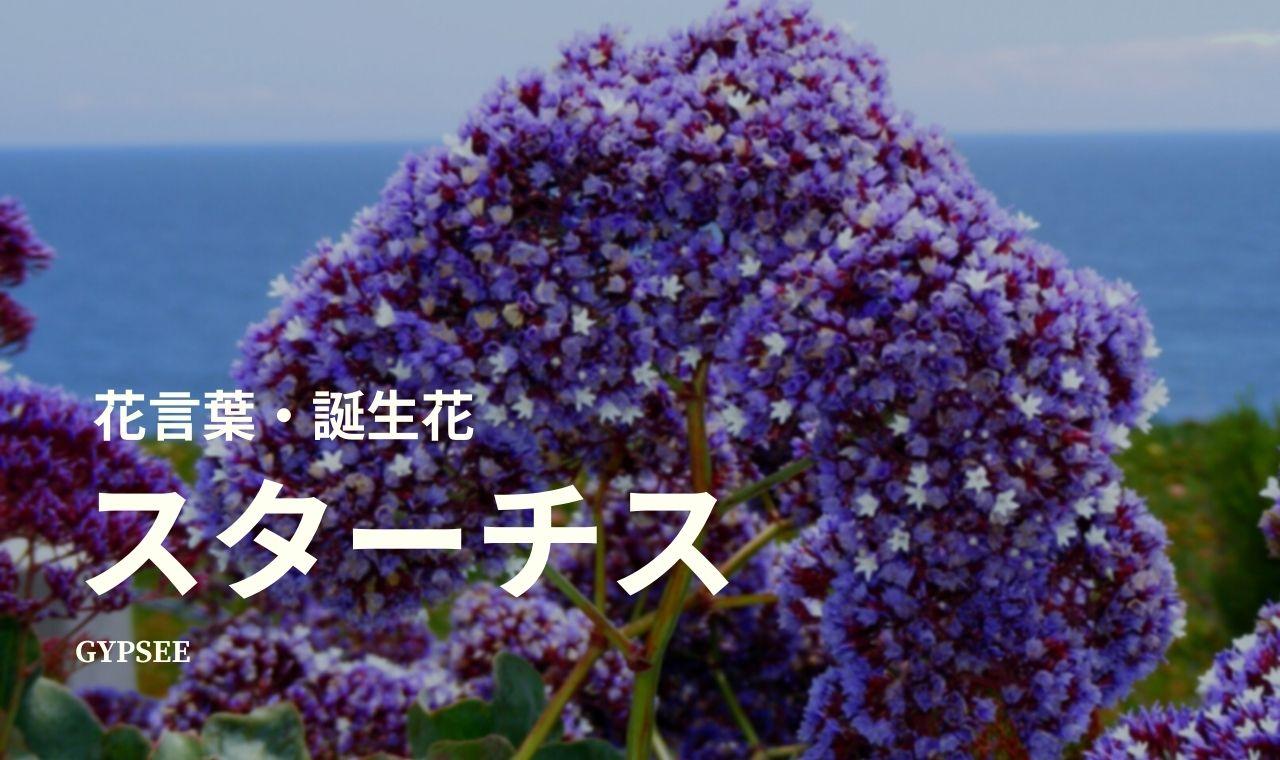スターチスの花言葉・誕生花・育て方・種類