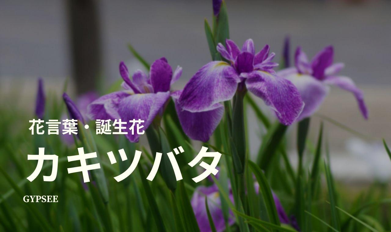 カキツバタの花言葉・誕生花・育て方・種類