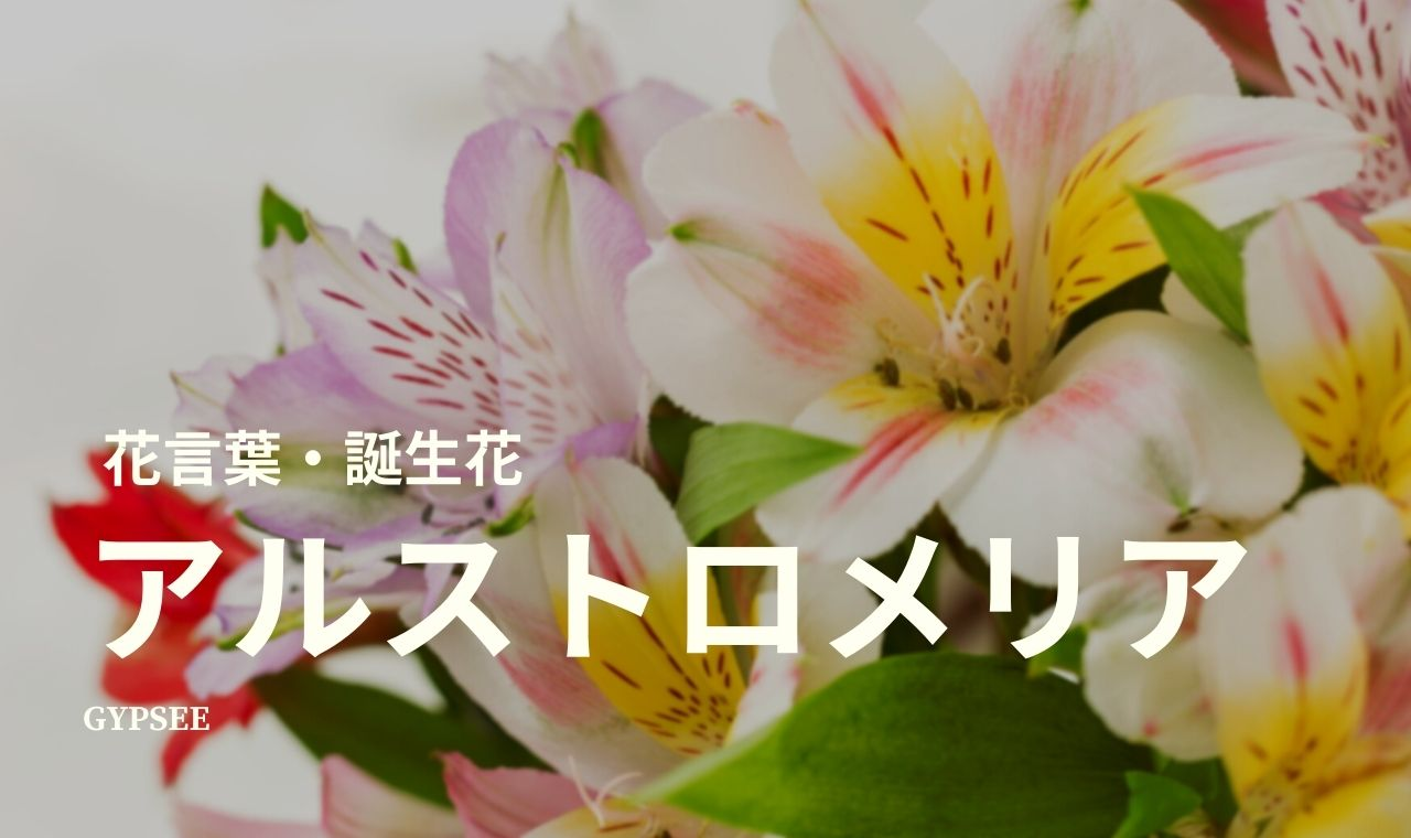 アルストロメリアの花言葉・誕生花・育て方・種類