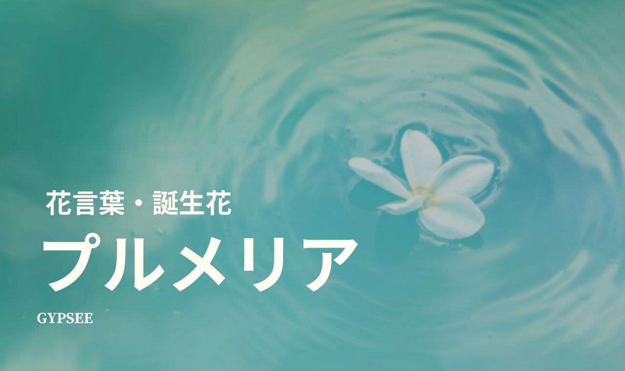 プルメリアの花言葉・誕生花・育て方・種類
