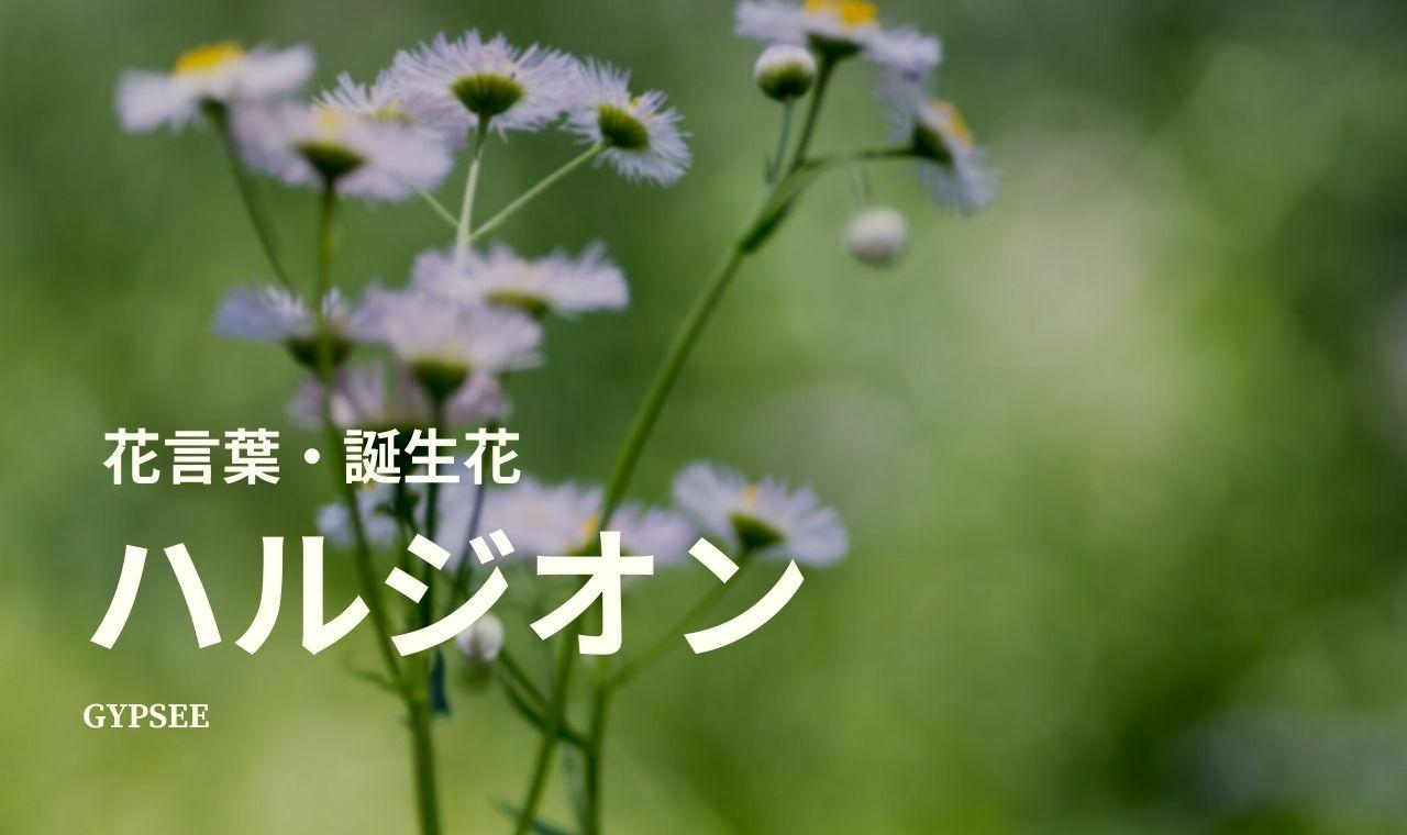 ハルジオンの花言葉・誕生花・育て方・種類