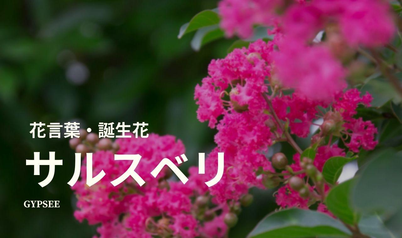 サルスベリ(百日紅)の花言葉・誕生花・育て方・種類