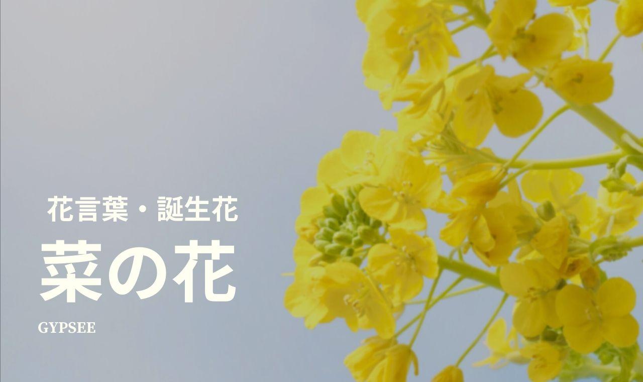 菜の花の花言葉・誕生花・育て方・種類