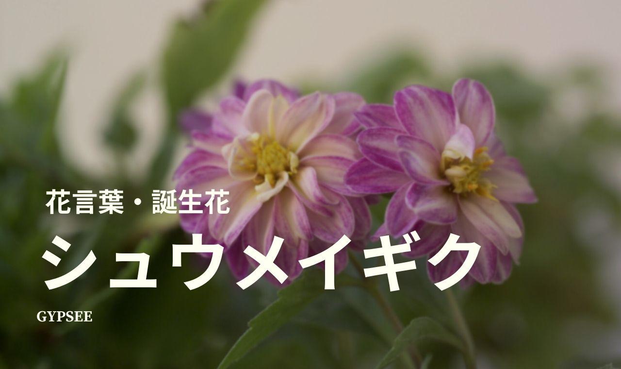 シュウメイギクの花言葉・誕生花・育て方・種類