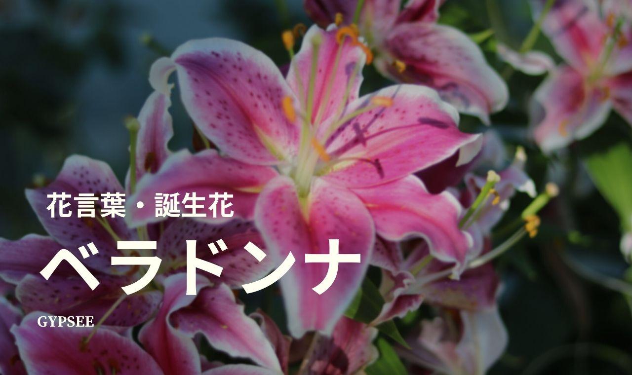 ベラドンナの花言葉・誕生花・育て方・種類