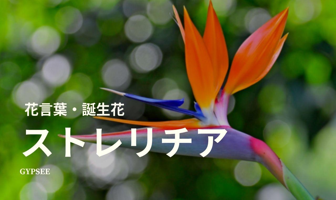 ストレリチアの花言葉・誕生花・育て方・種類