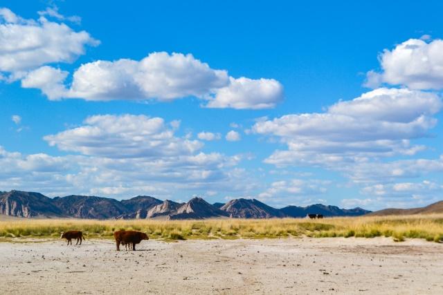 【モンゴル】広い空の下に牛がいる景色