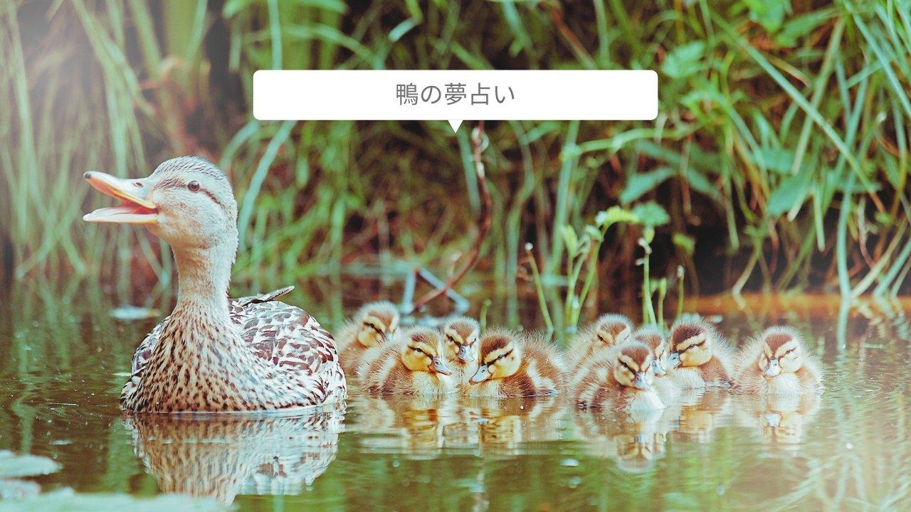 【夢占い】鴨の夢の意味17選!助ける・親子・赤ちゃん・泳ぐなど