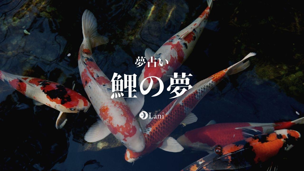 【夢占い】鯉の夢の意味48選!妊娠の暗示!宝くじ当たるなど吉夢